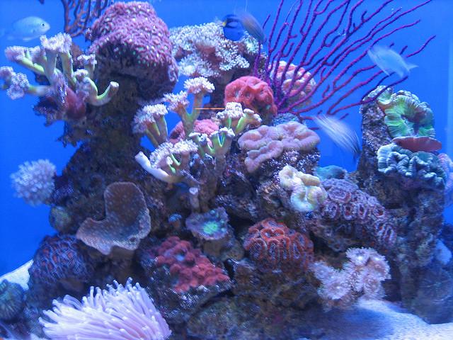 Aquarium of Western Australia by Sheila Thomson on Flickr