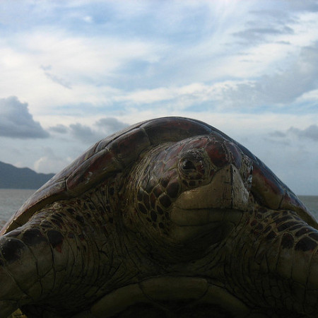 Turtle on Onda beach Orin Zebest