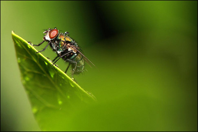 Fly in the Rain by Nam Nguyen on Flickr