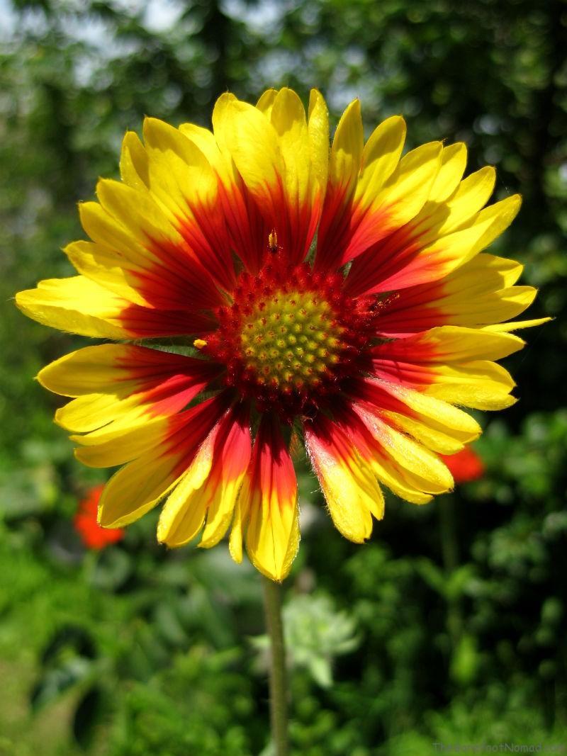 Yellow-Flower-800